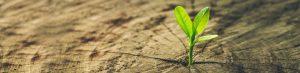 Erweitern Sie Ihre Führungskompetenz
